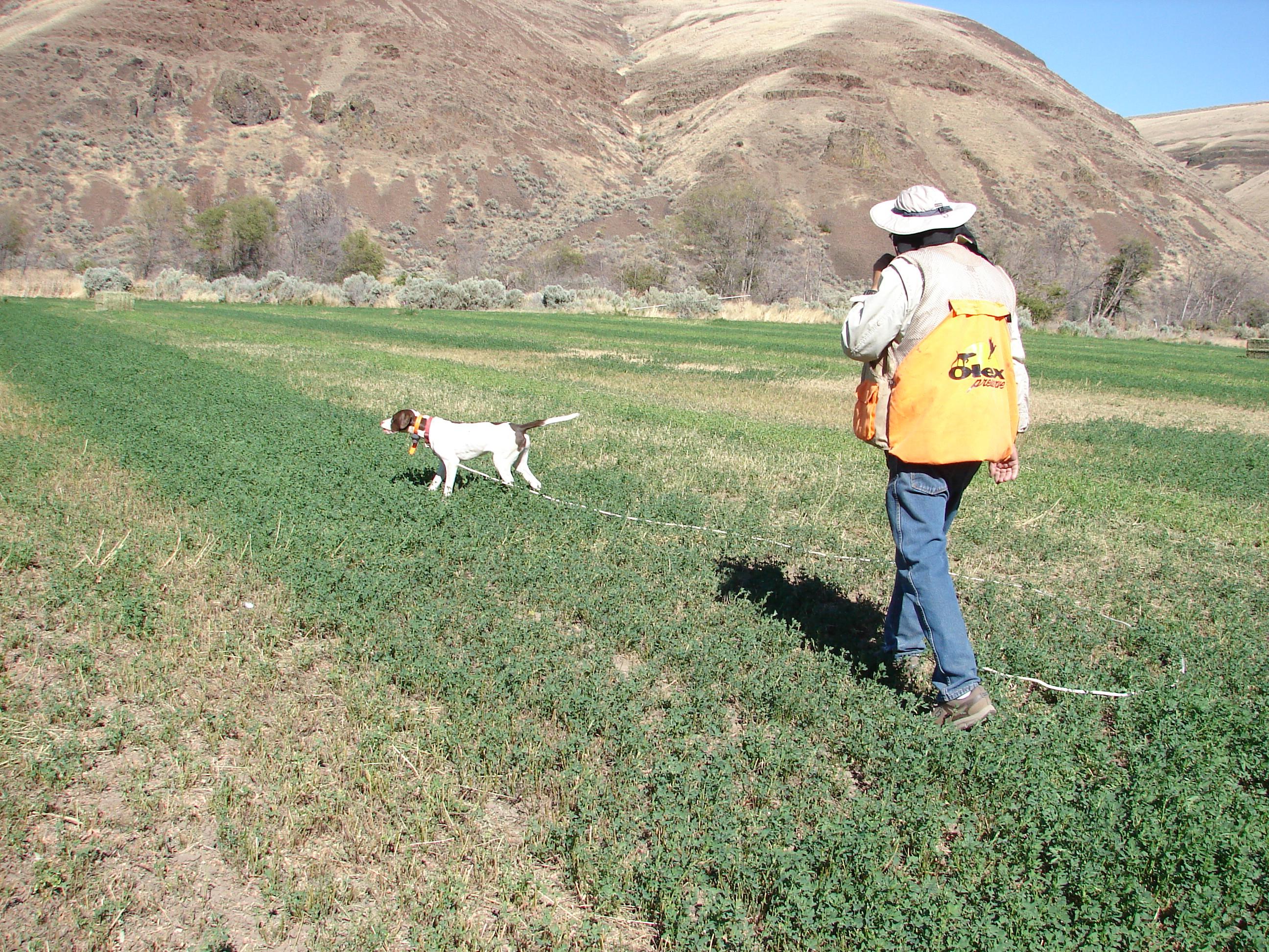 Arlington Dog Training